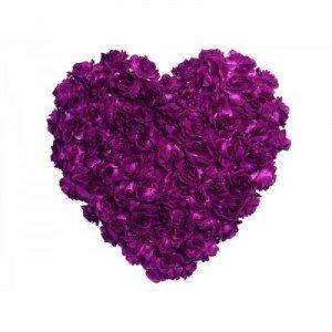 coeur-en-rose-couleur-violet