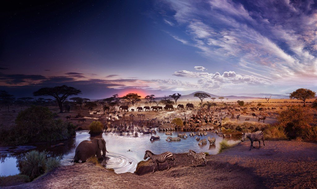 DAY_TO_NIGHT_SERENGETI_Master_17