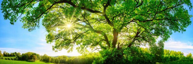 declaration-droits-arbres_shutterstock_474495670