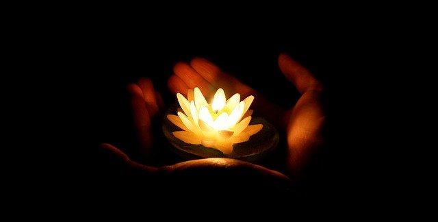 lotus-of-light