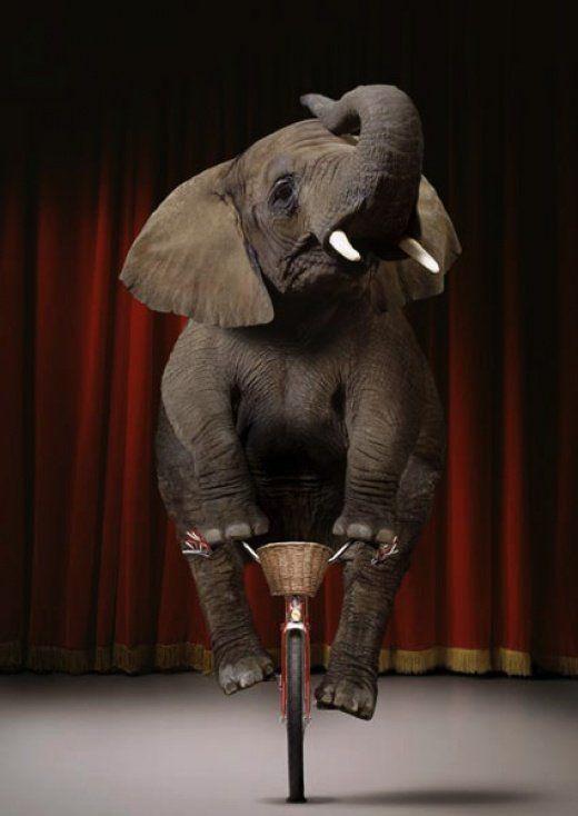 elephant-cirque animaux de la ferme