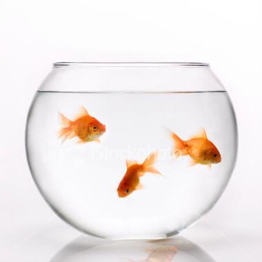 Savoir pour comprendre category archive mes emouvantes for Achat d un poisson rouge