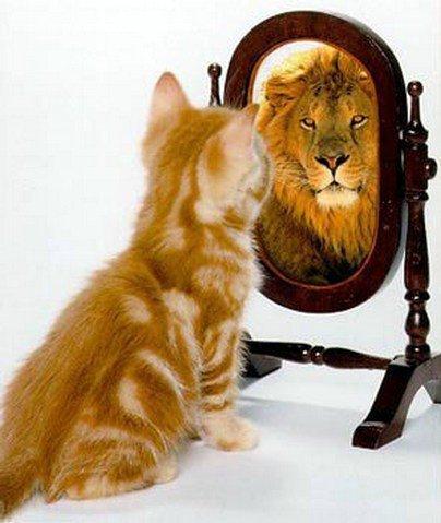 lioncat.jpg