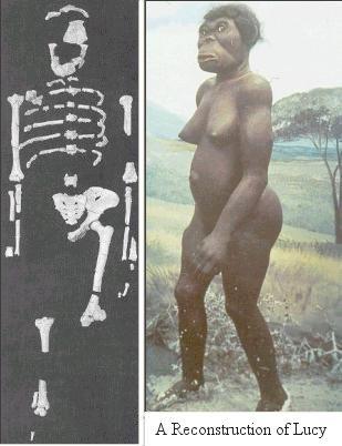Ma conversation avec Lucy, femme préhistorique dans MA CONVERSATION AVEC LUCY, FEMME PREHISTORIQUE ET UN GEANT DE 7 METRES DE LA PREHISTOIRE **** I10-38-Lucy