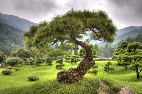 Aimer la Terre et la nature avec reconnaissance et gratitude parce qu'elle est bien plus que ce que l'on croit dans La nature révélée par l'au-delà 13333_1284192906426_1278215717_855316_2770149_n