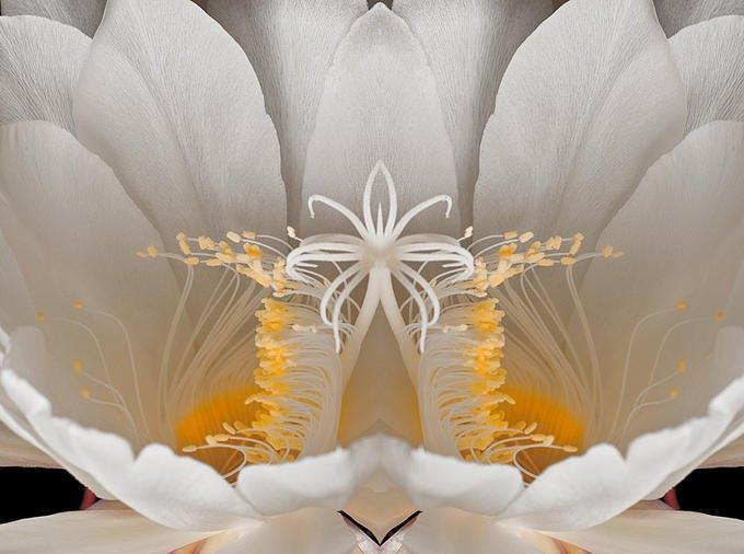Ma conversation avec l'âme collective des fleurs dans LES ESPRITS DE LA NATURE (l'eau, l'air, la Terre, les elfes, les gremlins, les lutins, les arbres, les fleurs..)**** 189144_10150159101473474_187431418473_8079301_5816046_n