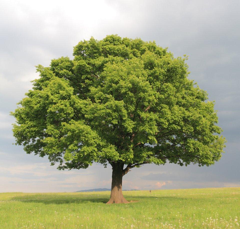 Ma conversation avec l'âme collective des arbres dans LES ESPRITS DE LA NATURE (l'eau, l'air, la Terre, les elfes, les gremlins, les lutins, les arbres, les fleurs..)**** 404851_287003674678597_100001069015325_738834_1138788705_n