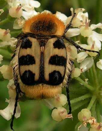 Ma conversation avec l'âme collective des insectes dans LES ESPRITS DE LA NATURE (l'eau, l'air, la Terre, les elfes, les gremlins, les lutins, les arbres, les fleurs..)**** 421888_293130864078098_242718302452688_846903_1797951207_n