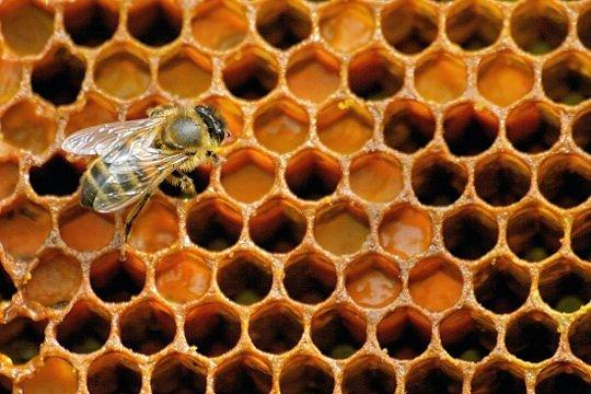 Le miel, un trésor fort apprécié par l'au-delà dans Le miel miel-367599