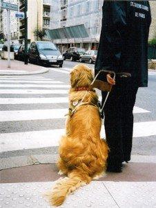Pourquoi naît-on aveugle, ou sourd ou muet? dans Aveugle? Sourd? Muet? rtemagicc_chien_02.jpg-226x300